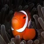 Förvånad Nemo